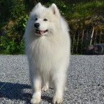 Nanook 5 and 1/2 years old