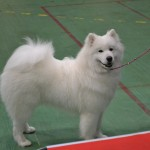 Taiga, 8 months old