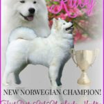 Ruby, Norwegian Champion